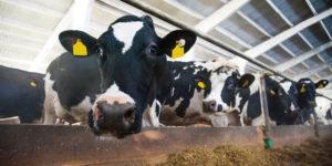 液体飼料・家畜用ビタミン剤